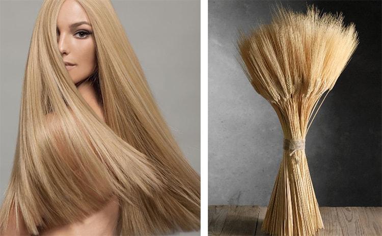 Волосы пшеничным цветам 4